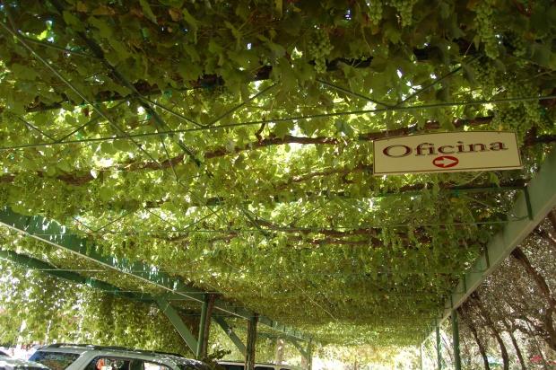 L.A. Cetto Vineyard, Valle de Guadalupe