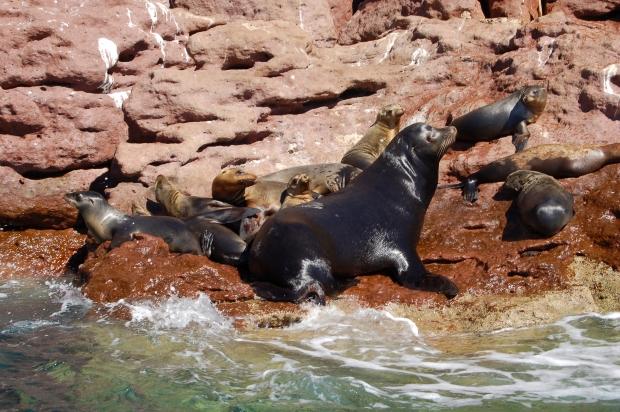 The sea lion colony of Los Islotes, La Paz, Baja Sur