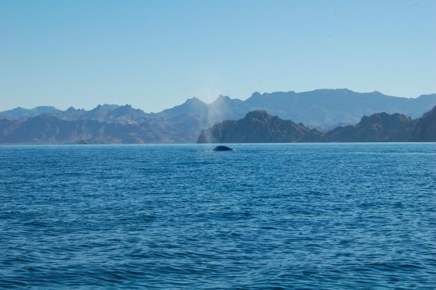 Sea of Cortez, Loreto, Baja California Sur, Mexico