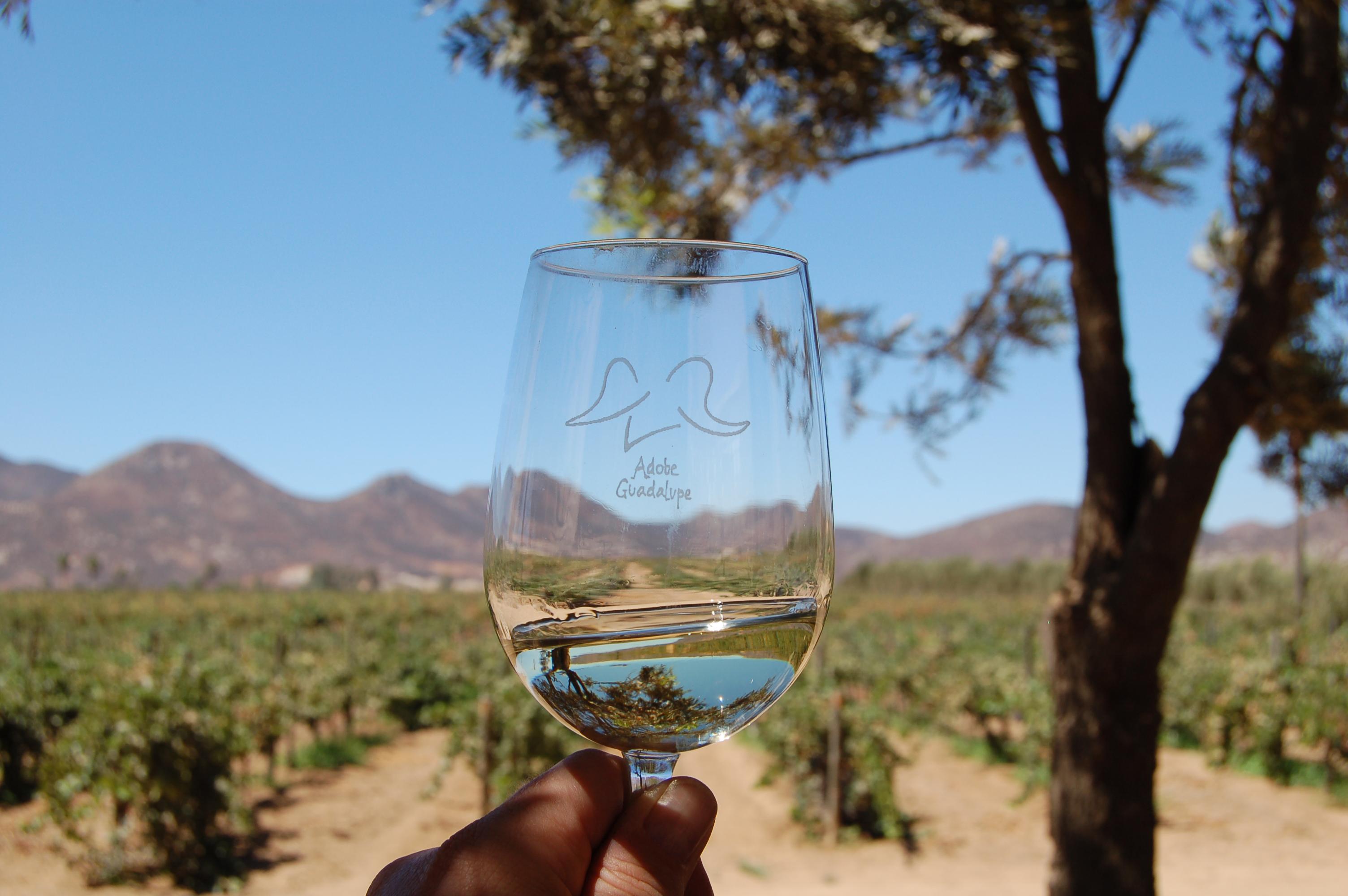 El jardin de adobe a foodie oasis in the valle de for Jardin secret wine